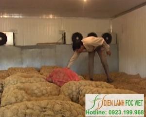 Kho lạnh bảo quản khoai tây giống – Quy trình bảo quản khoai tây giống bằng kho lạnh