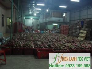 Dịch vụ lắp đặt kho lạnh bảo quản trái cây chuyên nghiệp