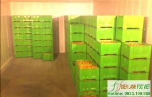 Lắp đặt kho lạnh trái cây