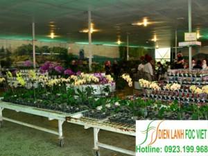 Dịch vụ lắp đặt kho lạnh bảo quản hoa tươi