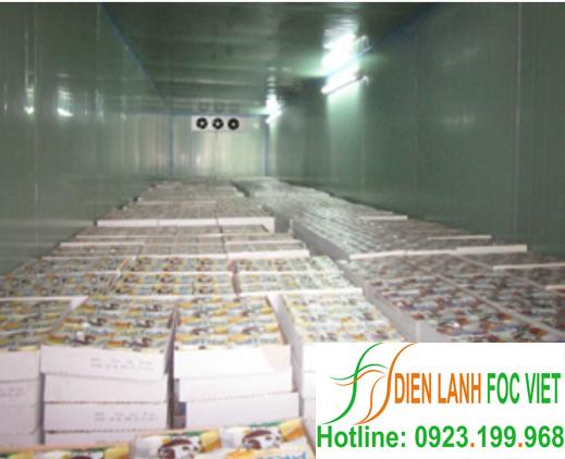 lắp đặt kho lạnh bảo quản thực phẩm