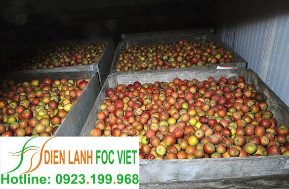 kho lạnh bảo quản táo