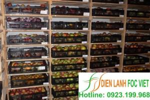 Kho lạnh bảo quản táo – Bảo quản lạnh táo