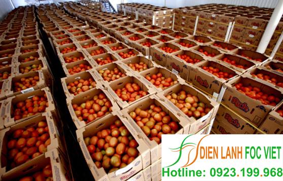 bảo quản cà chua bằng kho lạnh