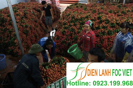 bảo quản trái cây sau thu hoạch