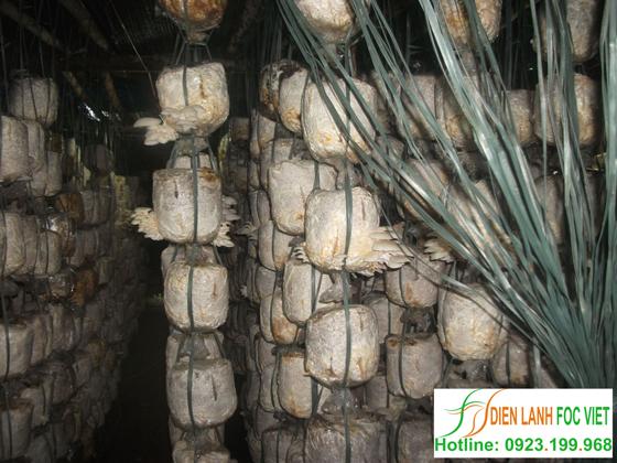 kỹ thuật trồng nấm