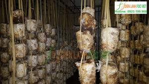 Những điều cần biết về thiết kế nhà lạnh trồng nấm ở nước ta