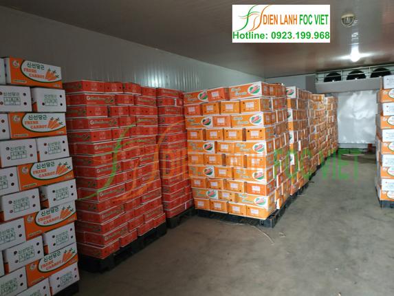 Cách bảo quản lạnh rau củ để tươi lâu - kho lạnh cà rốt