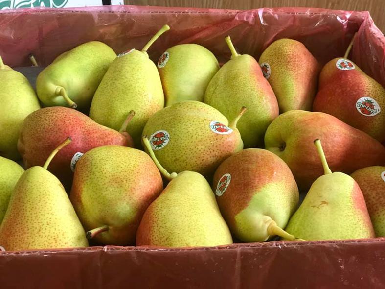 kho lạnh bảo quản trái cây nhập khẩu - kho lạnh bảo quản lê nam phi nhập khẩu