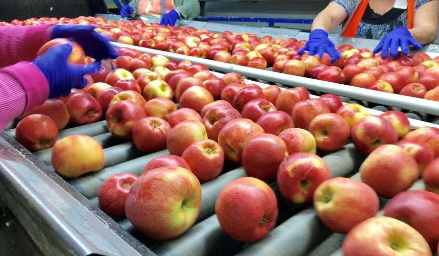 kho lạnh bảo quản trái cây nhập khẩu - kho lạnh bảo quản táo envy nhập khẩu