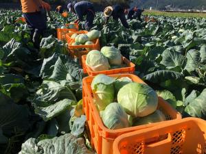 Kho lạnh bảo quản rau bắp cải