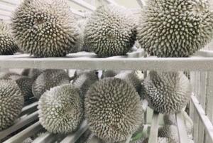 Gia tăng nhu cầu lắp đặt kho lạnh trái cây mùa covid